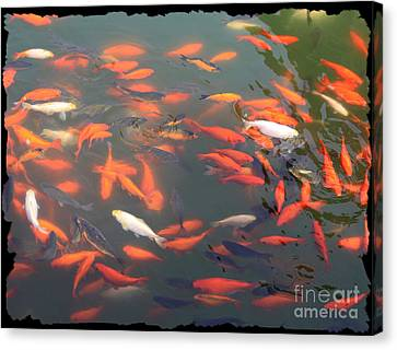 Imperial Koi Pond Canvas Print by Carol Groenen