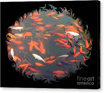 Imperial Koi Pond With Black Swirling Frame Canvas Print by Carol Groenen