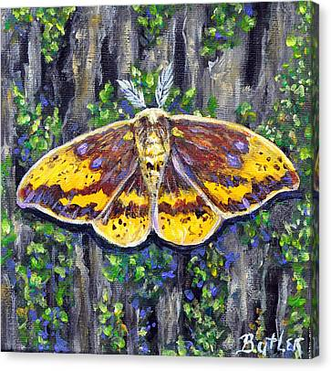 Imperial Moth Canvas Print by Gail Butler