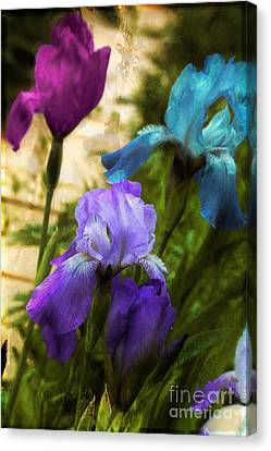 Impossible Irises Canvas Print by Mindy Sommers