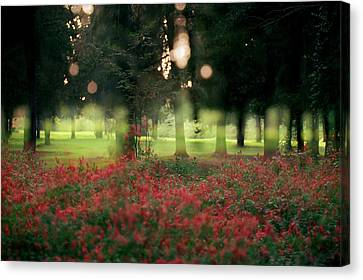Canvas Print featuring the photograph Impression At The Yarkon Park by Dubi Roman