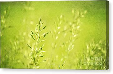 Impression Of Grass Canvas Print