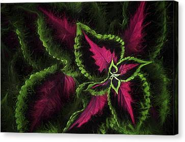 Impressionism - Plant - Coleus  Canvas Print by SharaLee Art