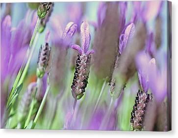 Impressionist Lavender Canvas Print