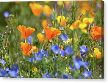 Canvas Print featuring the photograph Impressionist Wildflowers by Cliff Wassmann