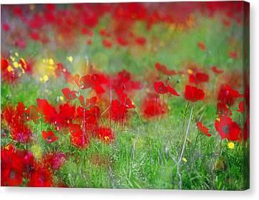 Impressionistic Blossom Near Shderot Canvas Print by Dubi Roman