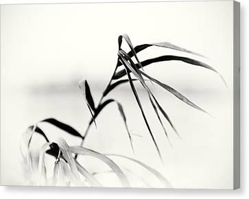 Impressions Monochromatic Canvas Print by Tomasz Dziubinski
