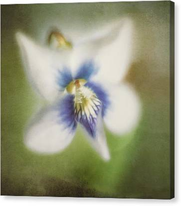 Impressions Of Spring Canvas Print by Scott Norris