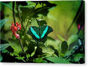 In A Butterfly World Canvas Print by Milena Ilieva