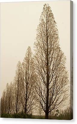 In A Row Canvas Print by Elvira Butler