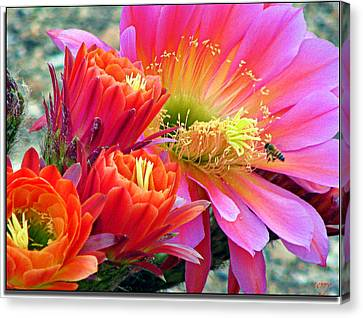 In A Sea Of Red And Pink Canvas Print