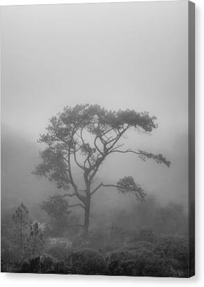 In A Soft Fog Canvas Print