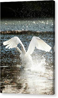 Reflecting Water Canvas Print - In A Splash by Karol Livote