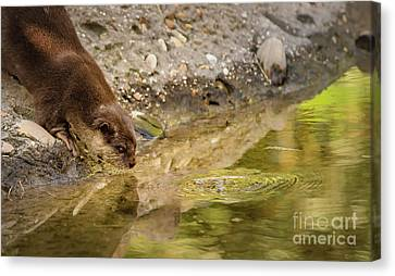 Zoo Canvas Print - In An Otter Life by Janal Koenig