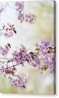 Canvas Print featuring the photograph In Bloom. Spring Watercolors by Jenny Rainbow