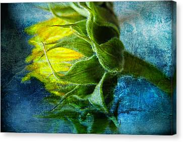 Canvas Print featuring the photograph In Blue by John Rivera