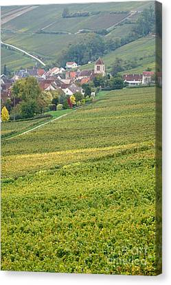 In Champagne Canvas Print by Olivier Le Queinec