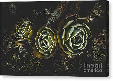 In Dark Bloom Canvas Print by Jorgo Photography - Wall Art Gallery