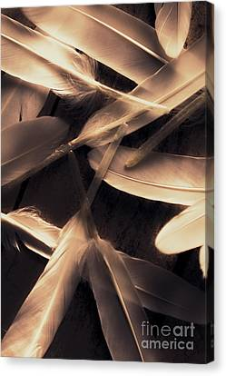 In Delicate Forms Canvas Print by Jorgo Photography - Wall Art Gallery