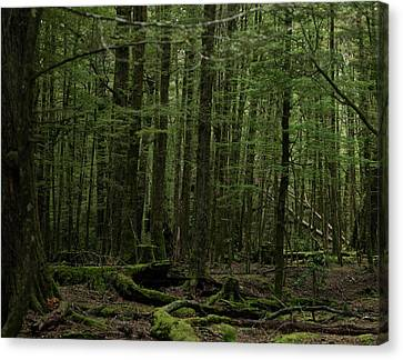 Canvas Print featuring the photograph In Fangorn Forest by Odille Esmonde-Morgan