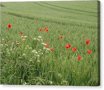 in Flanders Fields the  poppies blow Canvas Print by Mary Ellen Mueller Legault