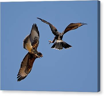 Canvas Print featuring the photograph In Flight Challenge H43 by Mark Myhaver