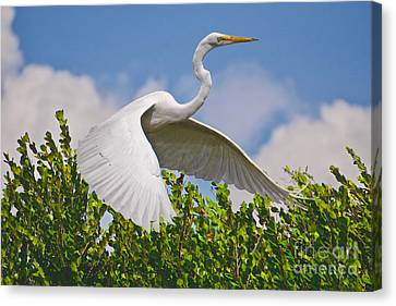 In Flight Canvas Print by Judy Kay