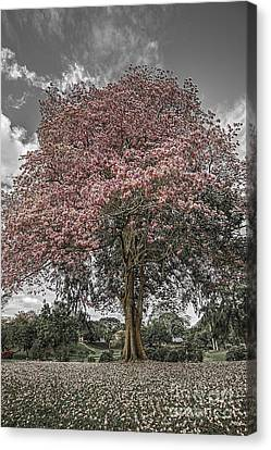 In Full Bloom Canvas Print by Serge Chriqui