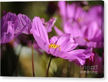 In Full Bloom Canvas Print by Sheila Ping