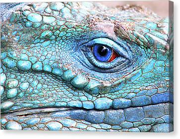 In His Eye Canvas Print