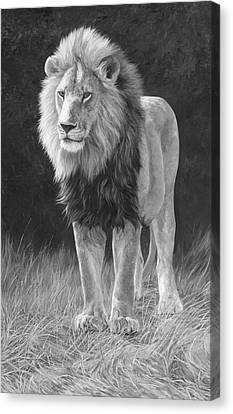 In His Prime - Black And White Canvas Print by Lucie Bilodeau