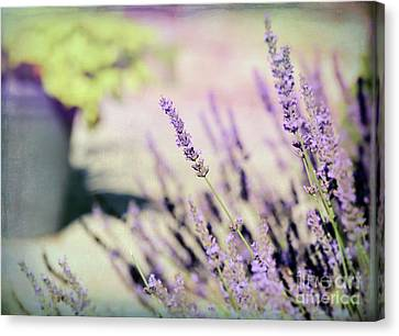 Canvas Print featuring the photograph In Love With Lavender by Kerri Farley