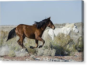 In Mid-flight  Canvas Print by Nicole Markmann Nelson