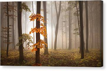 In November Light Canvas Print
