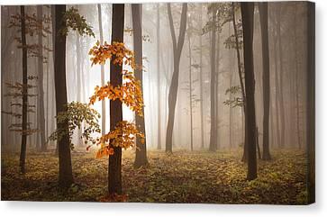 In November Light Canvas Print by Franz Schumacher
