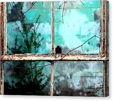 In Or Out Canvas Print by Amanda Barcon