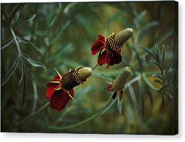 Canvas Print featuring the photograph In Rousseaus Garden by Douglas MooreZart