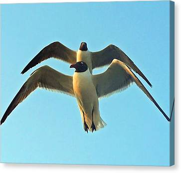 Canvas Print featuring the photograph In Tandem At Sunset by Sandi OReilly