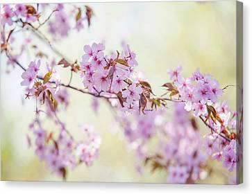 Canvas Print featuring the photograph In Tender Bloom. Spring Watercolors by Jenny Rainbow