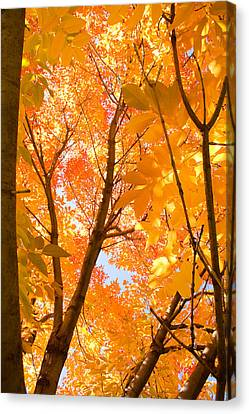 In The Autumn Mood  Canvas Print by James BO  Insogna
