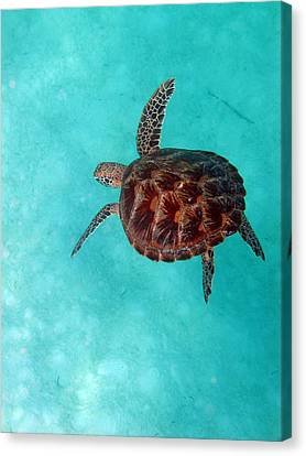 Art Print Lawrence the Turtle