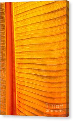 In The Bronze Morning Light Canvas Print