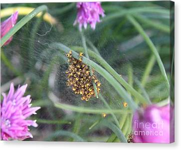 Canvas Print featuring the photograph In The Chives by Erica Hanel
