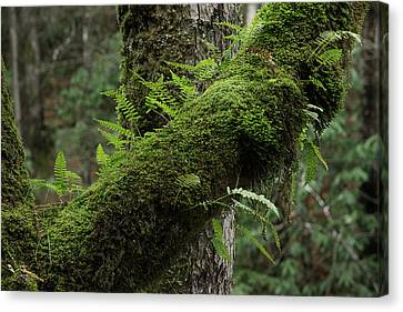 Canvas Print featuring the photograph In The Cool Of The Forest by Mike Eingle
