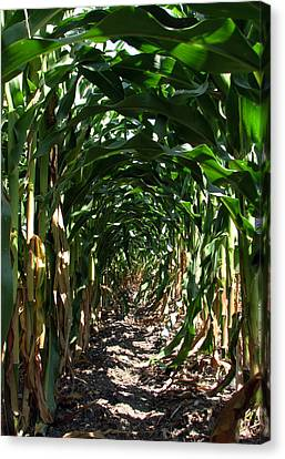 In The Corn  Canvas Print by Joanne Coyle