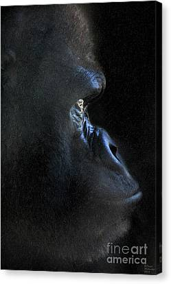 Limited Canvas Print - Gorilla In The Dark Large Canvas Art, Canvas Print, Large Art, Large Wall Decor, Home Decor, Photogr by David Millenheft
