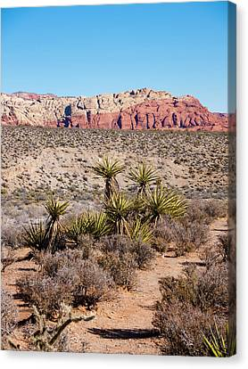 In The Desert Canvas Print by Rae Tucker