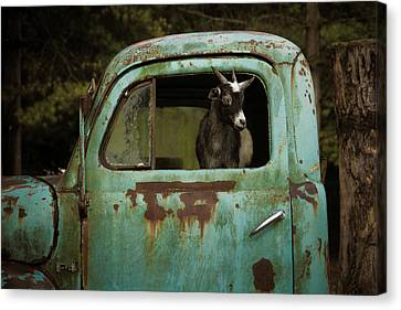 In The Drivers Seat Canvas Print
