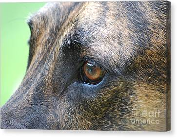 In The Eyes Of A Dog Canvas Print by Lila Fisher-Wenzel