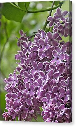 In The Garden. Lilac Canvas Print by Ben and Raisa Gertsberg